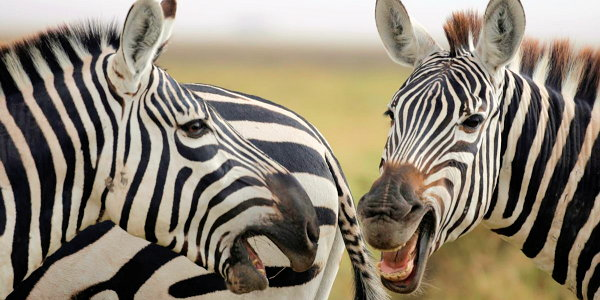 Zebra feedback