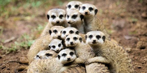 meerkat trust